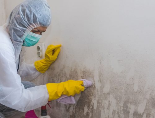 Mold Removal – Always Hire A Professional!